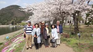 満開で出迎えてくれた河口湖版の桜